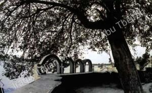 eves_tree_wm